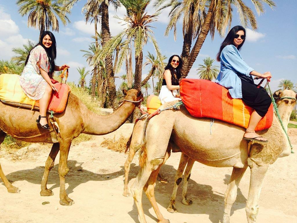 Balades à dos de chameau